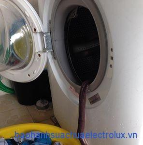Rắn bò vào trong máy giặt